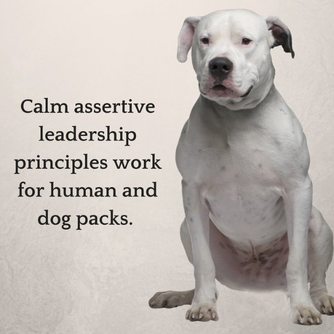 calm assertive leadership